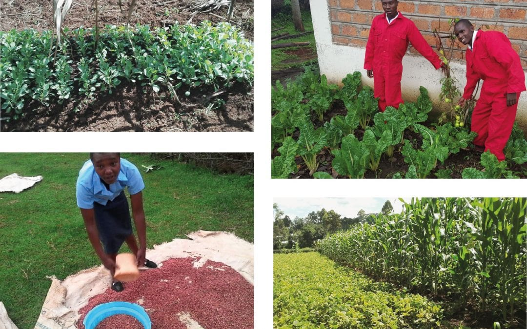 Agribusiness in the community
